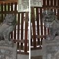 Photos: 川口神社(埼玉県)狛犬