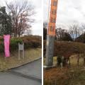 Photos: 菅谷館(嵐山町)泥田堀東西