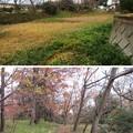 菅谷館(嵐山町)外堀西辺北奥