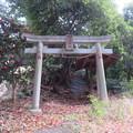 Photos: 滝の城(所沢市)稲荷社