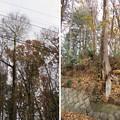 滝の城(所沢市)血の出る松跡