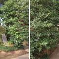 Photos: 滝の城(所沢市)土塁・小祠いくつか