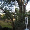 Photos: 平林寺(新座市)中門・本堂