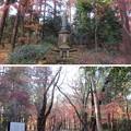 Photos: 平林寺(新座市)林泉境内