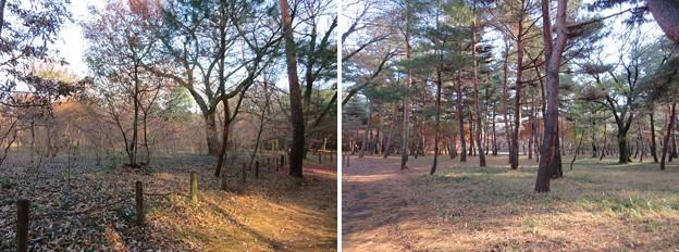 平林寺(新座市)境内林