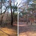 Photos: 平林寺(新座市)境内林