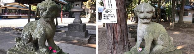 八坂神社(東村山市)狛犬