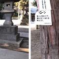 Photos: 八坂神社(東村山市)狛犬