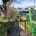 Photos: 九道の辻(小平市)野火止用水