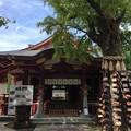 素盞雄神社(南千住6丁目)拝殿東 ・子育ての銀杏