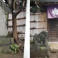 Photos: 11.03.22.諏訪神社(荒川区西日暮里3丁目)末廣稲荷・錢降稲荷