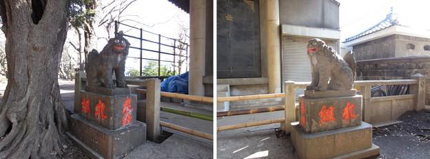 Photos: 12.03.13.諏訪神社(西日暮里)