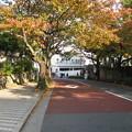 Photos: 10.11.11.本行寺(荒川区・台東区)門前 御殿坂
