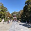 鶴岡八幡宮(鎌倉市)参道