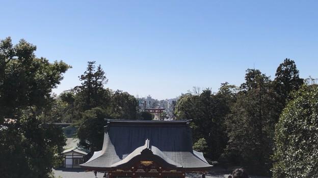 鶴岡八幡宮(鎌倉市)随神門前より若宮大路