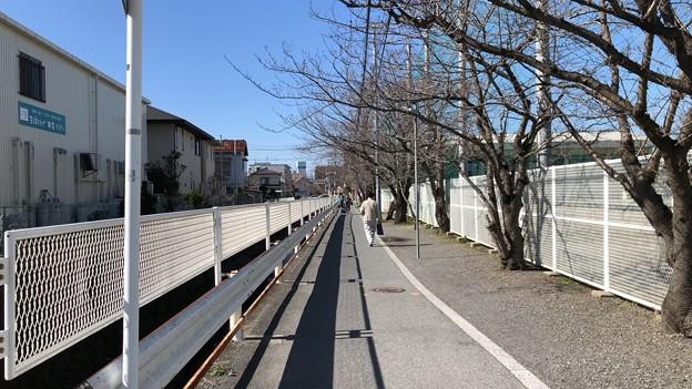 深沢小学校前小径(柏尾川支流。鎌倉市梶原)