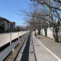Photos: 深沢小学校前小径(柏尾川支流。鎌倉市梶原)