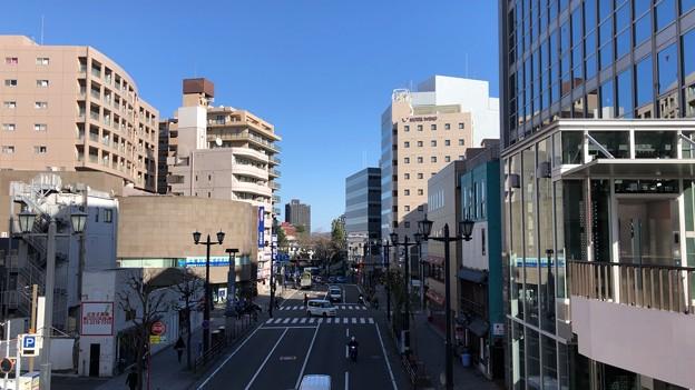 柳通り(藤沢市藤沢)