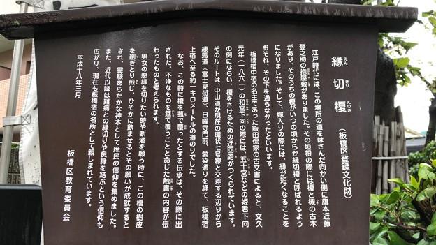 縁切榎(板橋区)