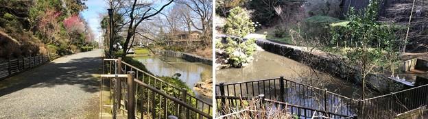 Photos: 初沢城(八王子市)城池?