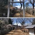 高尾天神社/初沢城(八王子市)北郭1