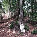 Photos: 浄福寺城(八王子市)虎口?