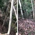 浄福寺城(八王子市)竪堀