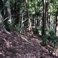 浄福寺城(八王子市)尾根