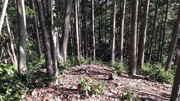 Photos: 浄福寺城 大手説(八王子市)物見郭先端