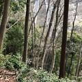 Photos: 浄福寺城 大手説(八王子市)大手郭より