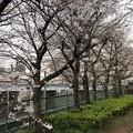 Photos: 20.03.23.御陰殿坂 脇(台東区)
