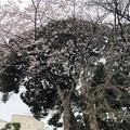 20.03.23.御陰殿坂 脇(台東区)