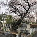 20.03.23.谷中霊園(台東区)大岡忠恕墓