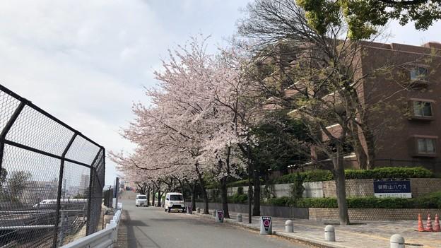 Photos: 20.03.30.御殿山(品川区)