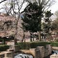 Photos: 20.03.30.御殿山(品川区)御殿山庭園