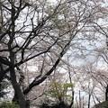 Photos: 20.03.30.御殿山(品川区)権現山公園