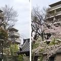 Photos: 20.03.30.品川寺(南品川)