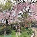 Photos: 20.03.30.海晏寺(品川区)
