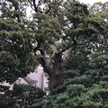 Photos: 仙台坂(品川区東大井)