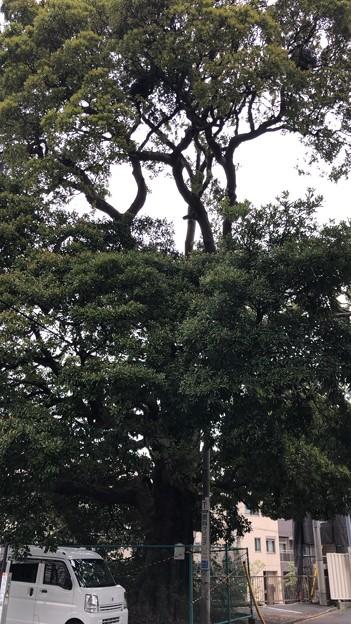 仙台坂(品川区東大井)
