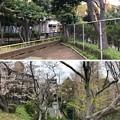 Photos: 大井林町1号墳(伊達家邸内古墳趾。品川区)