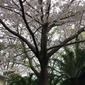 20.03.30.梶原氏館跡/来福寺(品川区東大井)安倍晋三氏