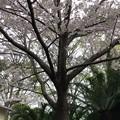 Photos: 20.03.30.梶原氏館跡/来福寺(品川区東大井)安倍晋三氏