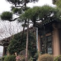 Photos: 梶原氏館跡/来福寺(品川区東大井)