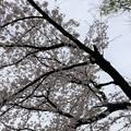20.03.30.梶原氏館跡/来福寺(品川区東大井)