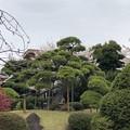 Photos: 20.03.30.梶原氏館跡/来福寺(品川区東大井)
