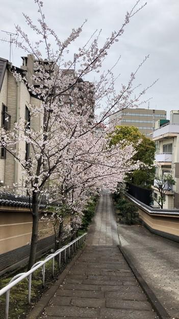 20.03.30.梶原氏館跡/来福寺(品川区東大井)参道