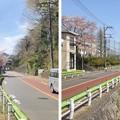 Photos: 八王子城 搦手(八王子市)陣場街道・北浅川