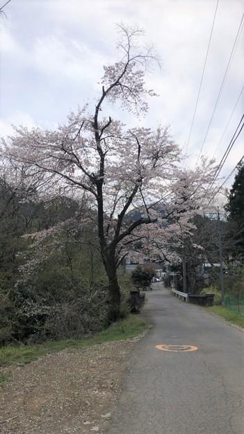 Photos: 20.04.07.八王子城 搦手道(八王子市)滝沢川