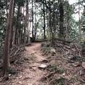 Photos: 八王子城 郭(八王子市)尾根道